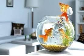 round fish bowls china round glass fish bowl acrylic fish tank acrylic aquarium china round glass round fish bowls