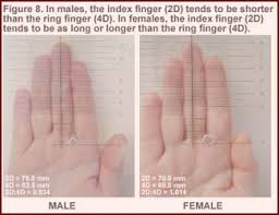 2d 4d Ratio Chart Talk To The Hand Who Are Todays Finger Measurement
