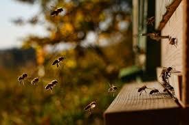 Αποτέλεσμα εικόνας για nature wildlife bee