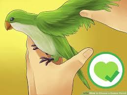 image led choose a quaker parrot step 2