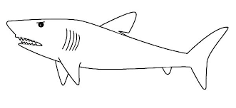 Coloring Hammerhead Shark Coloring Page