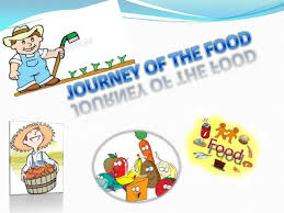 The Journey Of Food