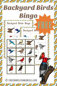 27 Best Our Backyard Birds Images On Pinterest  Backyard Birds Backyard Bird Watch