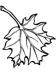 Maple Leaf Coloring Pages - Bestofcoloring.com