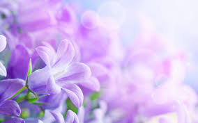 beautiful purple and white flowers. Fine Purple Beautiful Purple Flower Wallpapers High Quality Resolution  Desktop  Wallpaper Box With And White Flowers H