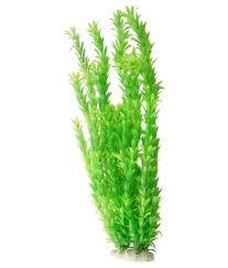 Sagar Fish Green Leaf Plant. serviceCentreDetails