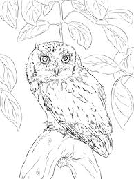 Small Picture Eastern Screech Owl coloring page Free Printable Coloring Pages