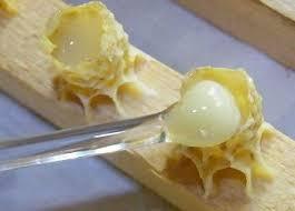 Image result for маточное молочко