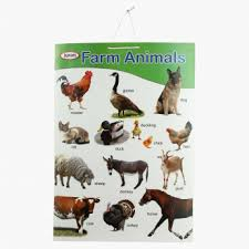 Sterling Double Side Animal Chart