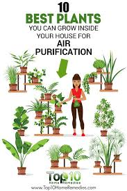 10 Best Plants You Can Grow Indoors for Air Purification - Sequin Gardens