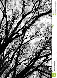 Tree silhouettes isolated