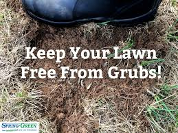 Control And Treat Damaging Grubs On Your Lawn
