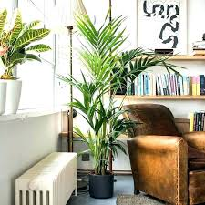 large indoor plants big best tall houseplants house that are safe for cats and indo
