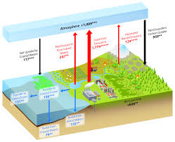 Carbon Cycle Flow Chart What Is The Carbon Cycle What Is The Science Behind It
