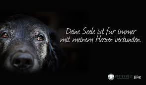 Hunde Sprüche 3 Pfotenwelt Blog