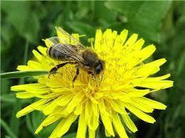 """Результат пошуку зображень за запитом """"картинки недопущення отруєння пестицидами бджіл"""""""