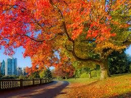 India Tree Food Coloring Chart Canada Fall Foliage Reports