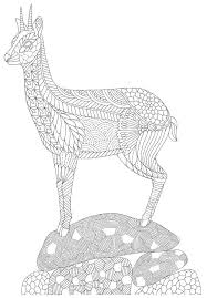 Small Picture 27 best Art Thrapie Ursid images on Pinterest Coloring books