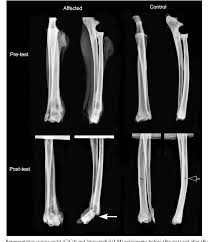 Canine Osteosarcoma Figure 2 From Mechanical Properties Of Canine Osteosarcoma