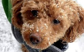 keeping your dog warm kennel floor heaters and other options