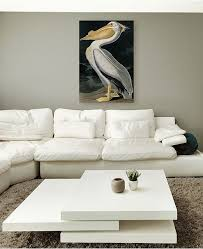 main image  on pelican canvas wall art with trademark global john james audubon american white pelican canvas