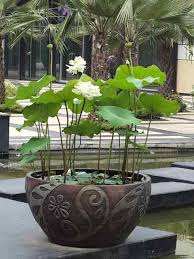 designing and manufacturing beautiful pots and sending them worldwide we have customers in usa australia new zealand united kingdom italy japan