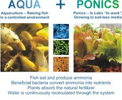 Tilapia Aquaponics Designs What Is Aquaponics The Aquaponic Source