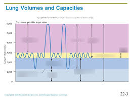 Lab 5 Respiratory Physiology Respiratory Volumes And