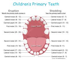 Teething Chart Babies Stages Of Teething And Helpful Hints Kids Dental Online Plano