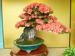 top 10 flowering bonsai trees bonsai