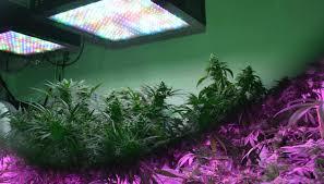 Do Grow Lights Work Full Spectrum Grow Light Full Spectrum Led Lights