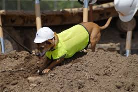 Image of: John Dinon Ingham County Animal Control Groundbreaking Ceremony 2018 Granger Construction 007 Granger Construction Breaking Ground On Ingham County Animal Control Shelter June 2018