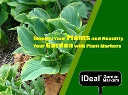 identify your plants