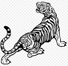 tiger black and white drawing. Interesting White White Tiger Drawing Black And White  For Tiger And