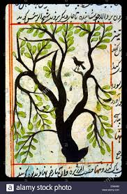 A small bird perched in a tree, from 'Aj?'ib al-makhl?q?t wa-ghar?'ib  al-mawj?d?t (Marvels of Things Created and Miraculous Aspects of Things  Existing) by ...