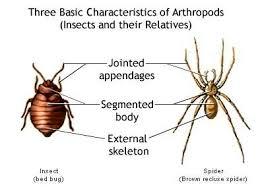 Biology Phylum Annelida And Arthropoda Askiitians