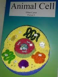 animal cell project poster. Plain Cell Image Result For Animal Cell 3d Project Poster In Animal Cell Project Poster A