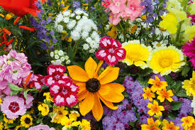 Klappkarte Mit Getrockneten Blüten Plant Happy