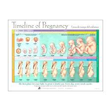 Pregnancy Child Growth Chart Fruit Chart For Pregnancy Baby Growth Chart Food Week 25