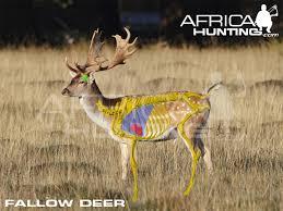 Deer Vitals Chart Vital Chart Diagram For Axis Texasbowhunter Com Community