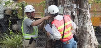 Tree Risk Assessment Training Atp Asia Tree Preservation