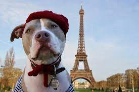 taking your dog to france the