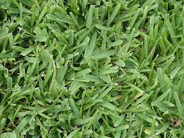 What Turf Grass Is That And How To Identify The Different Grasses