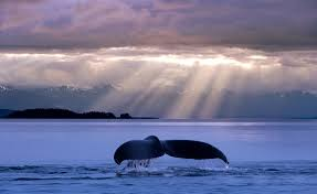 Image result for Alaska photos