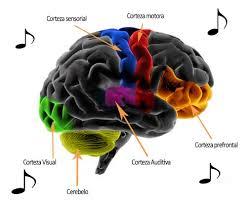 Resultado de imagen de El efecto que produce la música en nuestro cerebro