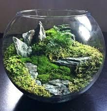 moss terrarium ideas moss terrarium marimo moss ball terrarium diy