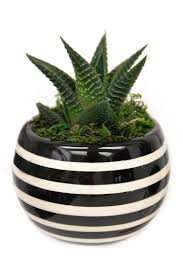Livetrends Design Group Livetrends Classic Magnet Pot Black And White Striped