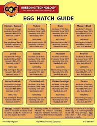 Egg Hatch Guide Hatching Chickens Raising Chickens