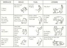 Wolf Body Language Chart Flossy Flossy2473 On Pinterest