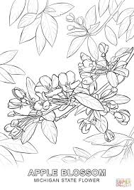 Small Picture Michigan State Flower coloring page Free Printable Coloring Pages